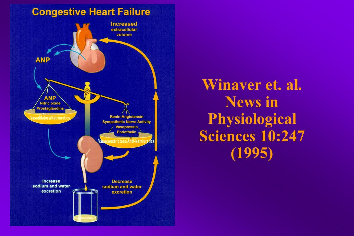 Winaver et. al. News in Physiological Sciences 10:247 (1995)