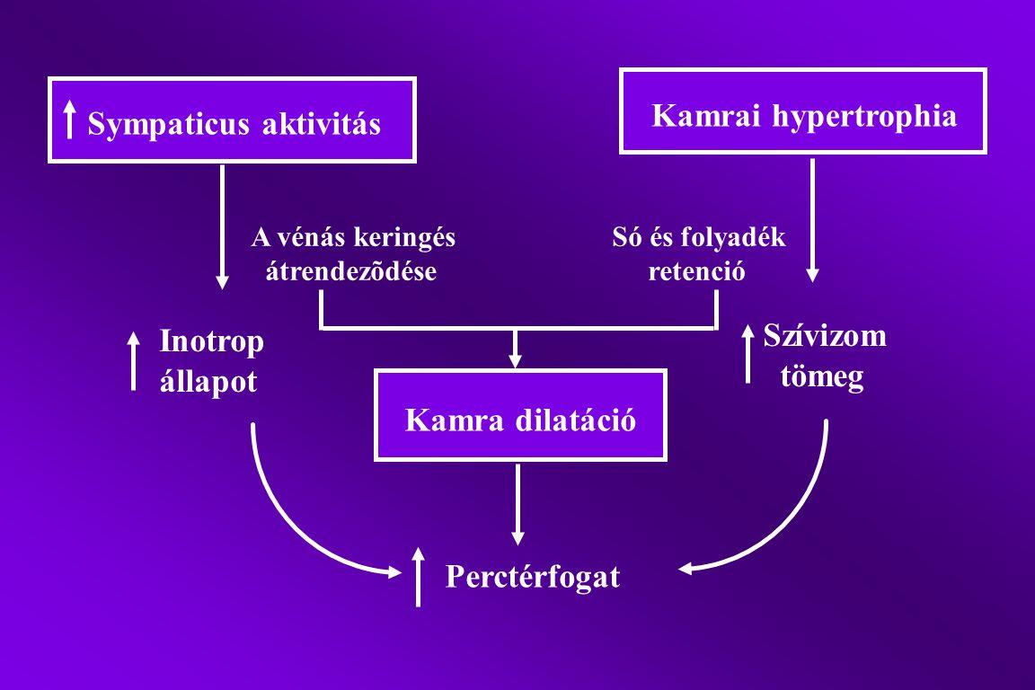 Sympaticus aktivitás Kamrai hypertrophia Kamra dilatáció A vénás keringés átrendezõdése Só és folyadék retenció Perctérfogat Inotrop állapot Szívizom