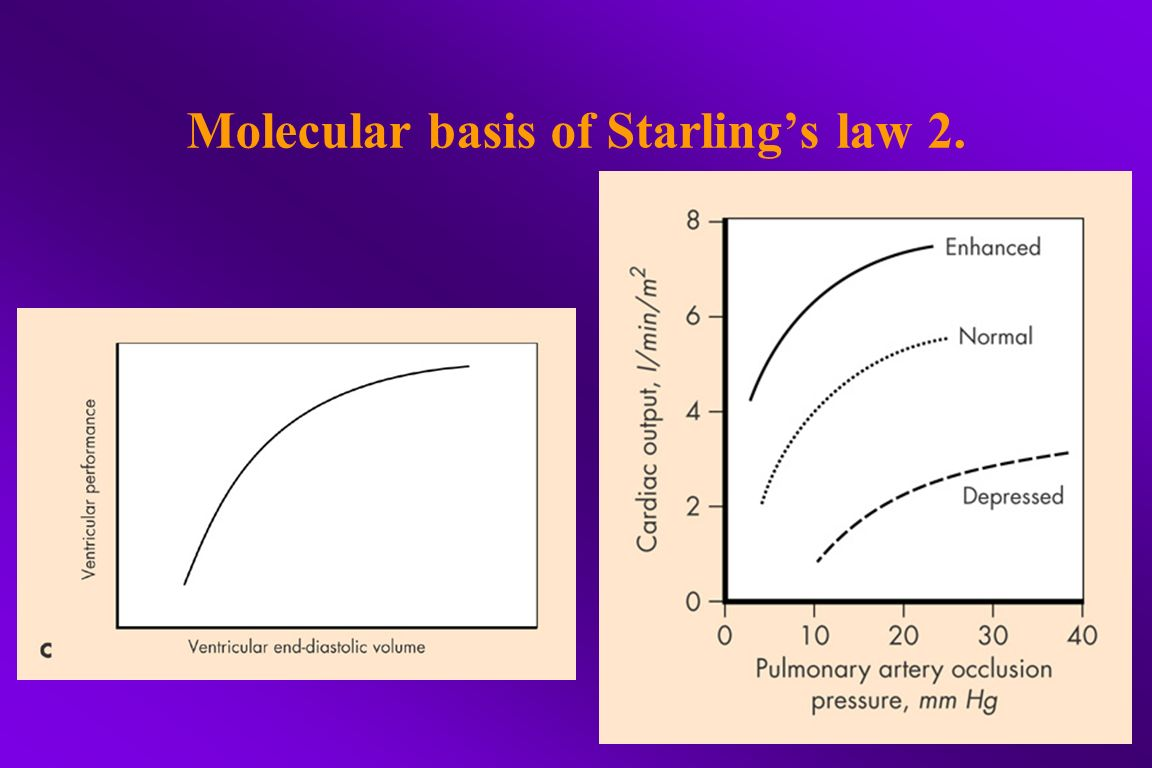 Molecular basis of Starling's law 2.