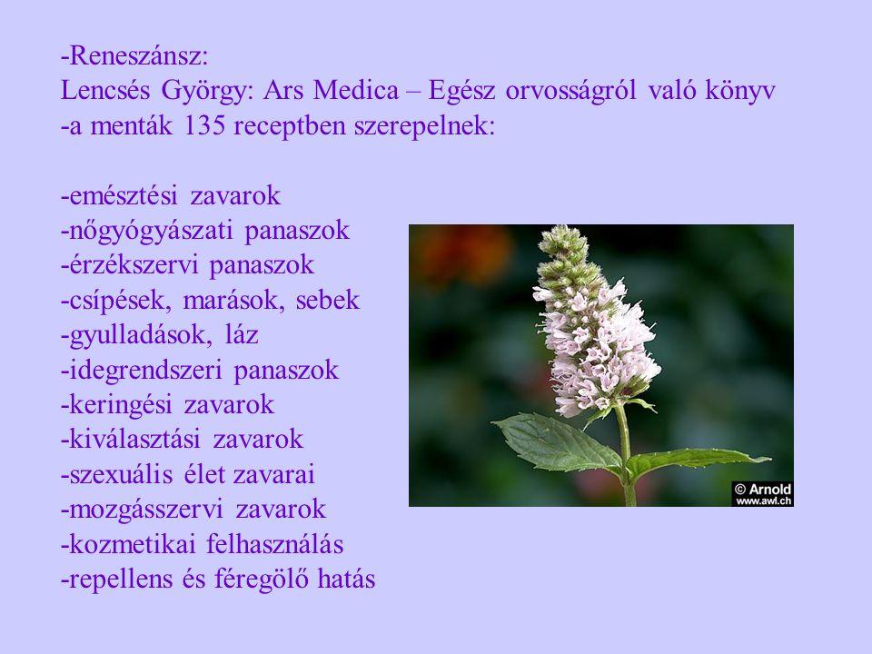 -Reneszánsz: Lencsés György: Ars Medica – Egész orvosságról való könyv -a menták 135 receptben szerepelnek: -emésztési zavarok -nőgyógyászati panaszok