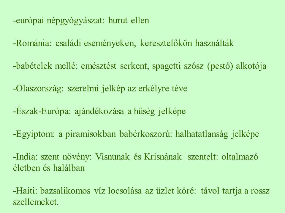 -európai népgyógyászat: hurut ellen -Románia: családi eseményeken, keresztelőkön használták -babételek mellé: emésztést serkent, spagetti szósz (pestó
