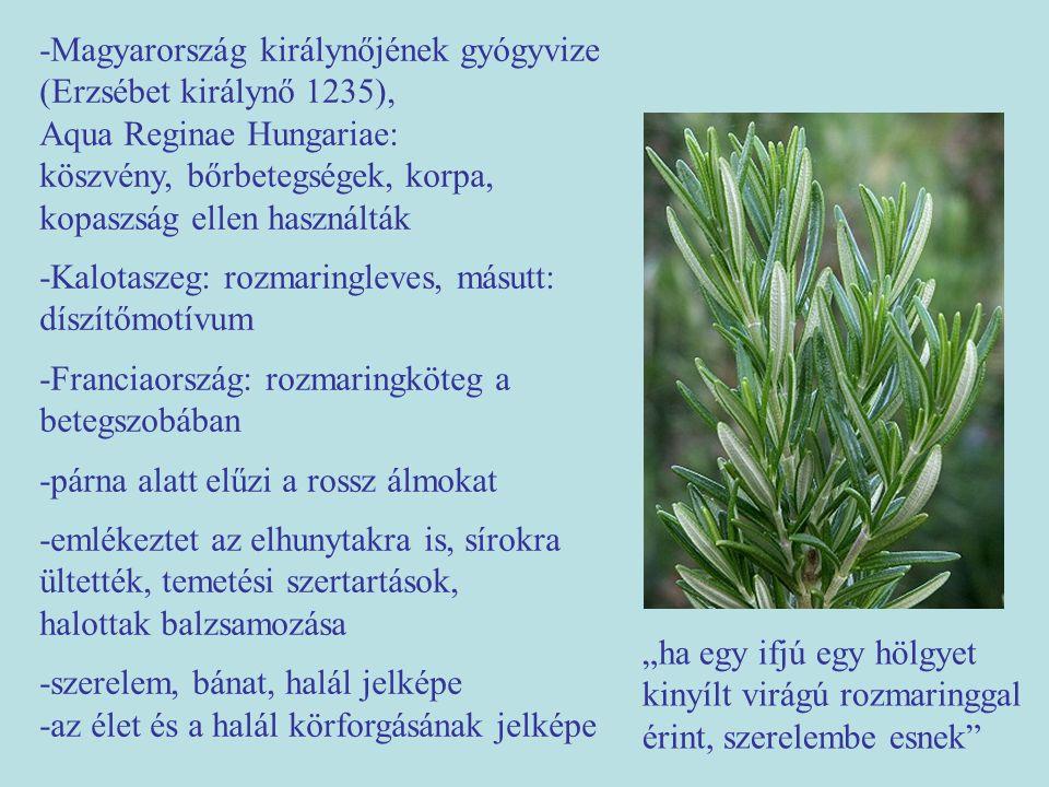 -Magyarország királynőjének gyógyvize (Erzsébet királynő 1235), Aqua Reginae Hungariae: köszvény, bőrbetegségek, korpa, kopaszság ellen használták -Ka