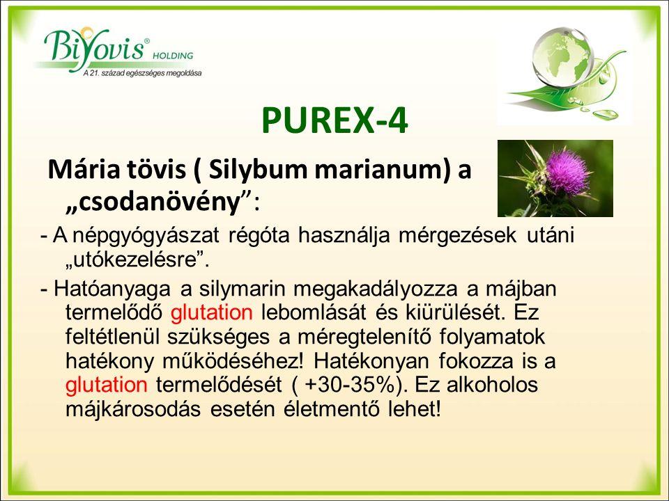 """PUREX-4 Mária tövis ( Silybum marianum) a """"csodanövény : - A népgyógyászat régóta használja mérgezések utáni """"utókezelésre ."""