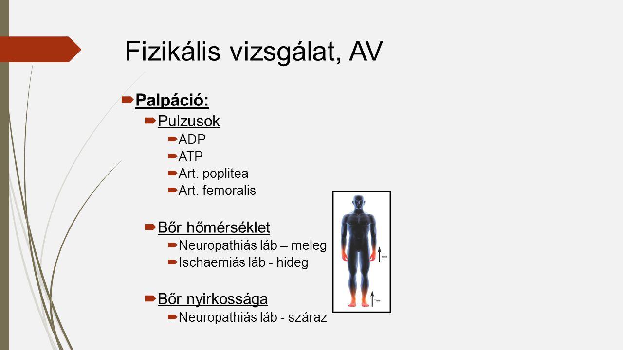  Palpáció:  Pulzusok  ADP  ATP  Art. poplitea  Art.