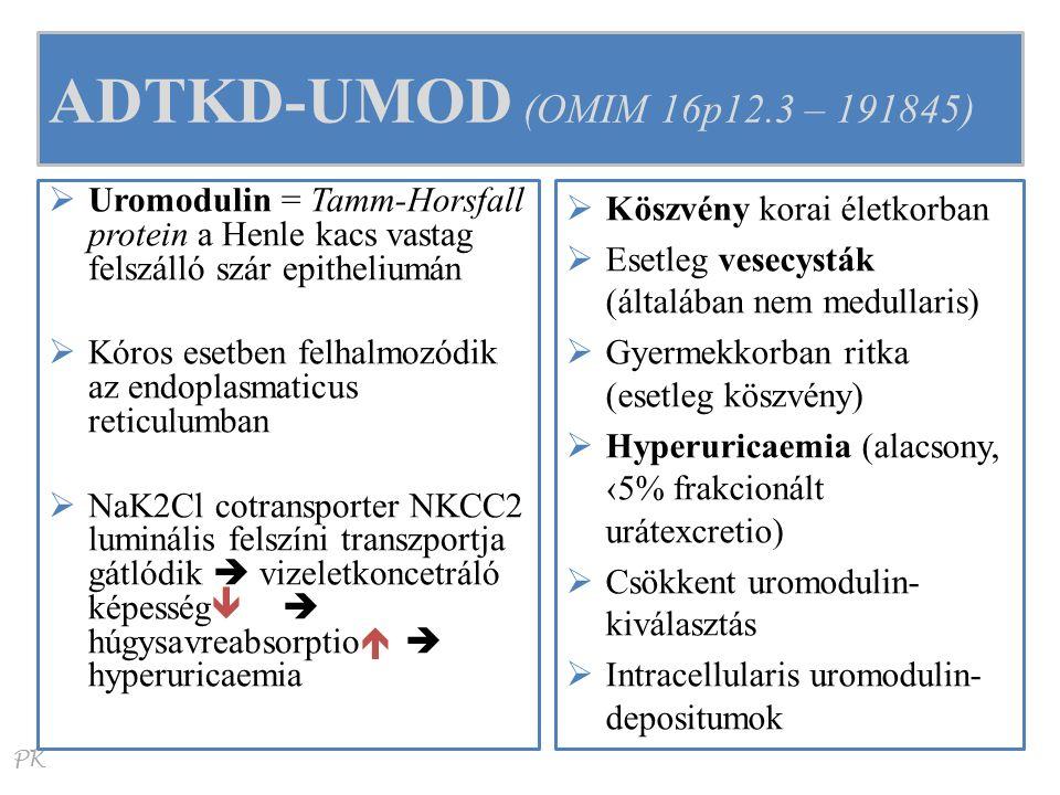 PK ADTKD-UMOD (OMIM 16p12.3 – 191845)  Uromodulin = Tamm-Horsfall protein a Henle kacs vastag felszálló szár epitheliumán  Kóros esetben felhalmozódik az endoplasmaticus reticulumban  NaK2Cl cotransporter NKCC2 luminális felszíni transzportja gátlódik  vizeletkoncetráló képesség  húgysavreabsorptio   hyperuricaemia  Köszvény korai életkorban  Esetleg vesecysták (általában nem medullaris)  Gyermekkorban ritka (esetleg köszvény)  Hyperuricaemia (alacsony, ‹5% frakcionált urátexcretio)  Csökkent uromodulin- kiválasztás  Intracellularis uromodulin- depositumok