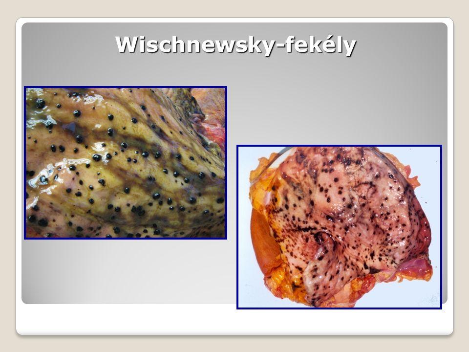 Wischnewsky-fekély