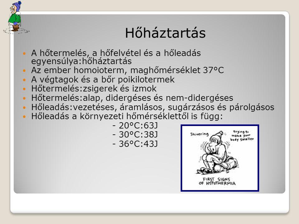 Hőháztartás A hőtermelés, a hőfelvétel és a hőleadás egyensúlya:hőháztartás Az ember homoioterm, maghőmérséklet 37°C A végtagok és a bőr poikilotermek Hőtermelés:zsigerek és izmok Hőtermelés:alap, didergéses és nem-didergéses Hőleadás:vezetéses, áramlásos, sugárzásos és párolgásos Hőleadás a környezeti hőmérséklettől is függ: - 20°C:63J - 30°C:38J - 36°C:43J