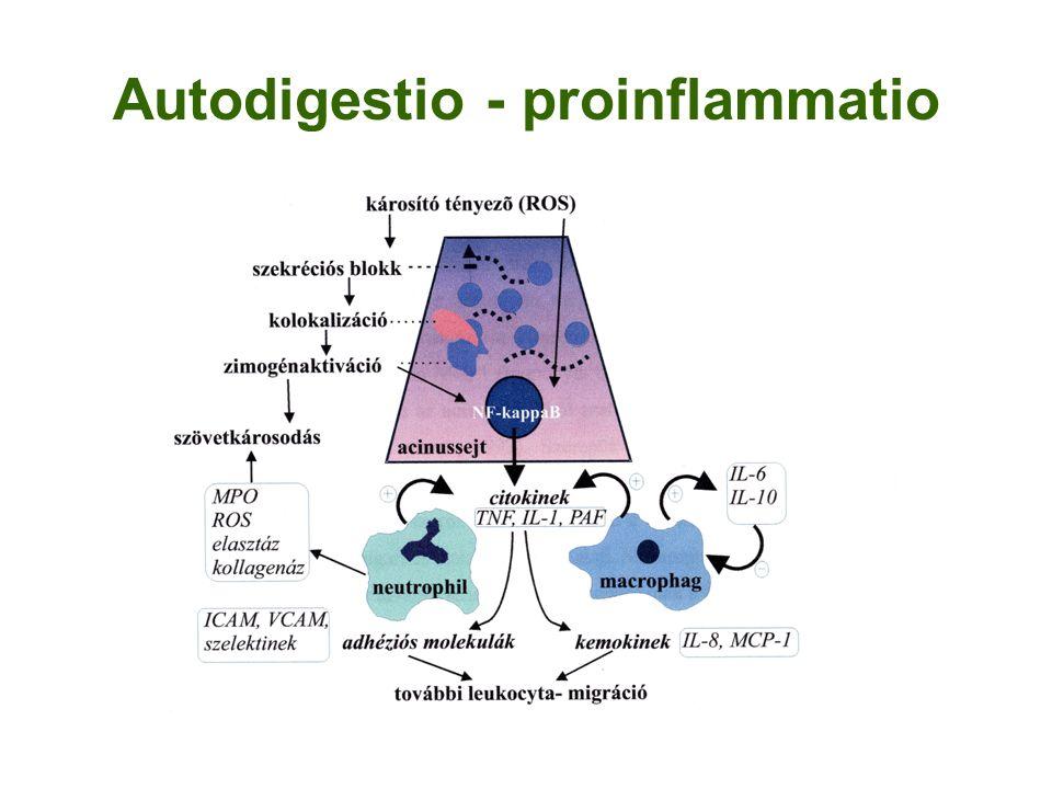 Autodigestio - proinflammatio