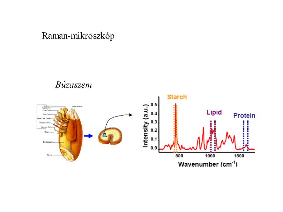 Raman-mikroszkóp Búzaszem