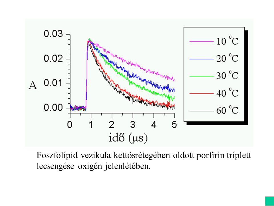 Foszfolipid vezikula kettősrétegében oldott porfirin triplett lecsengése oxigén jelenlétében.
