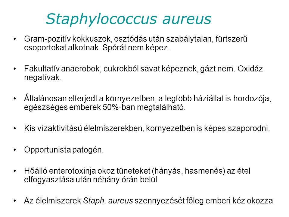 Staphylococcus aureus Gram-pozitív kokkuszok, osztódás után szabálytalan, fürtszerű csoportokat alkotnak.