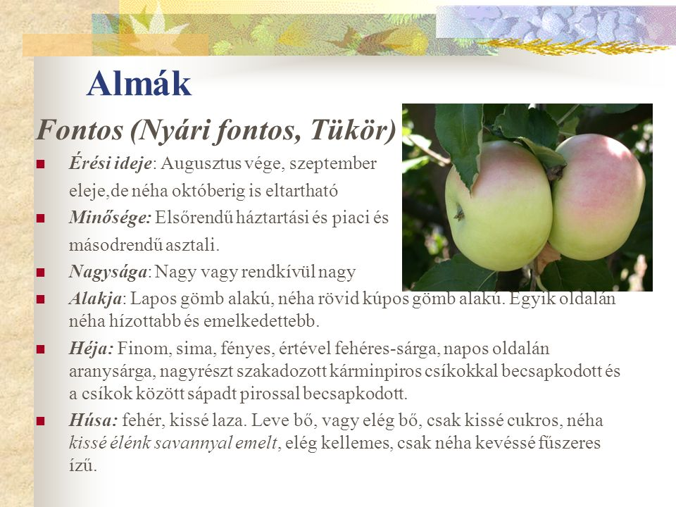 Almák Fontos (Nyári fontos, Tükör) Érési ideje: Augusztus vége, szeptember eleje,de néha októberig is eltartható Minősége: Elsőrendű háztartási és piaci és másodrendű asztali.