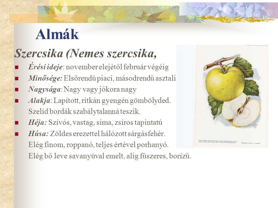 Almák Szercsika (Nemes szercsika, Érési ideje: november elejétől február végéig Minősége: Elsőrendű piaci, másodrendű asztali. Nagysága: Nagy vagy jók
