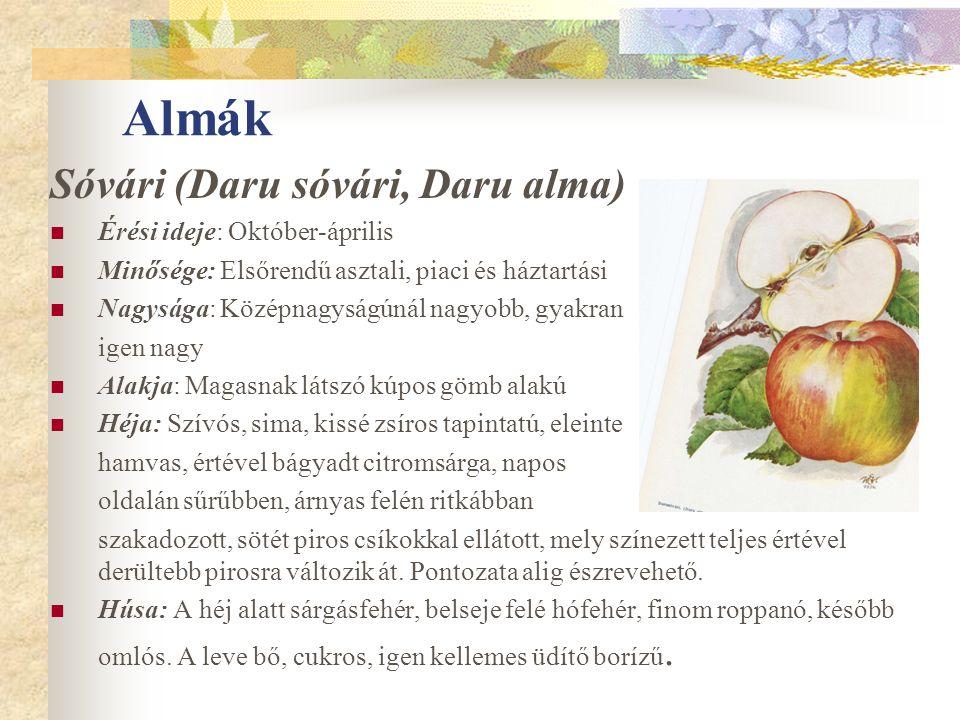 Almák Sóvári (Daru sóvári, Daru alma) Érési ideje: Október-április Minősége: Elsőrendű asztali, piaci és háztartási Nagysága: Középnagyságúnál nagyobb