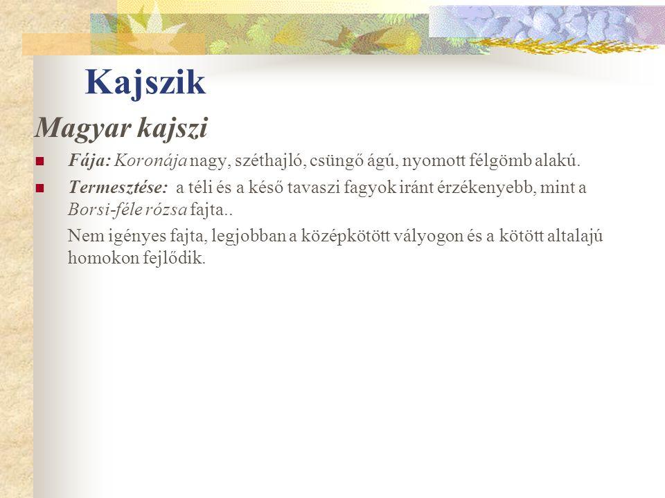 Kajszik Magyar kajszi Fája: Koronája nagy, széthajló, csüngő ágú, nyomott félgömb alakú.