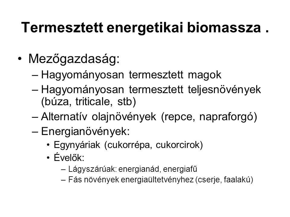 Termesztett energetikai biomassza.