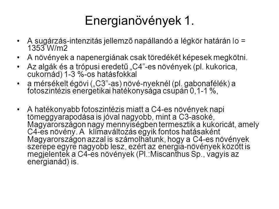 Energianövények 1.