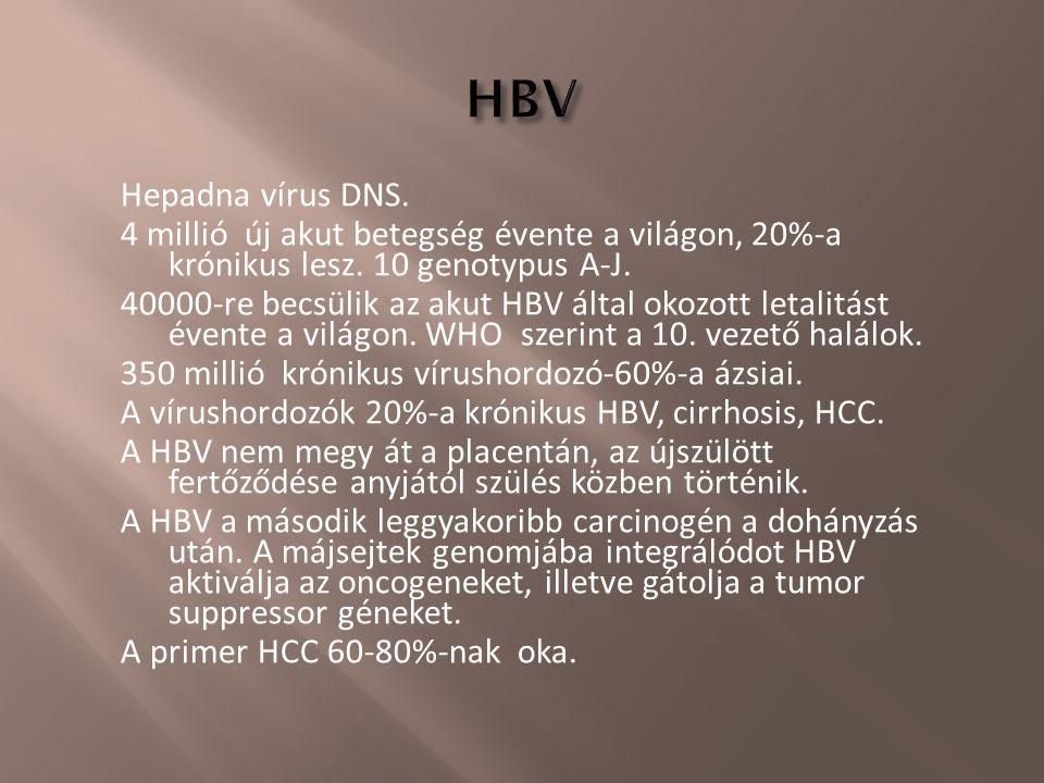 Hepadna vírus DNS. 4 millió új akut betegség évente a világon, 20%-a krónikus lesz. 10 genotypus A-J. 40000-re becsülik az akut HBV által okozott leta