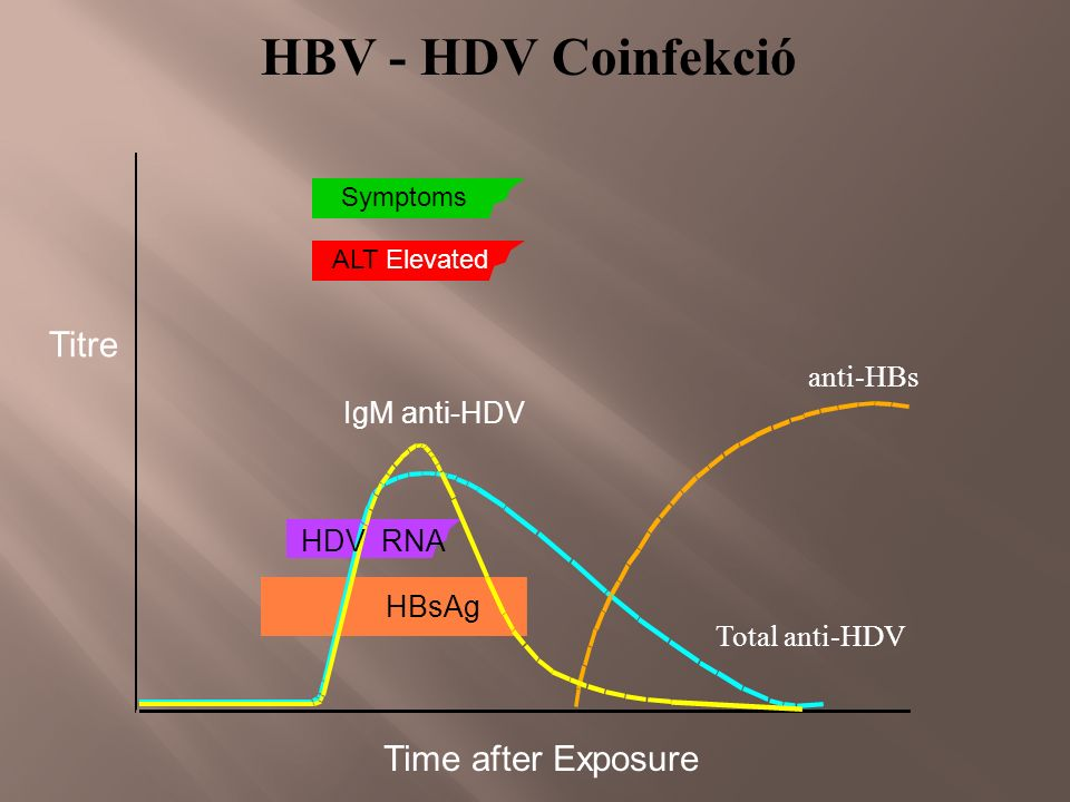 anti-HBs Symptoms ALT Elevated Total anti-HDV IgM anti-HDV HDV RNA HBsAg HBV - HDV Coinfekció Time after Exposure Titre