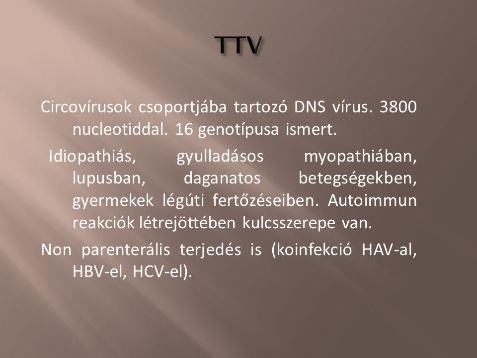 Circovírusok csoportjába tartozó DNS vírus. 3800 nucleotiddal. 16 genotípusa ismert. Idiopathiás, gyulladásos myopathiában, lupusban, daganatos betegs