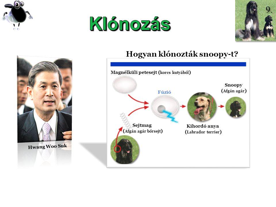DOLLY Hwang Woo Suk Hogyan klónozták snoopy-t? Magnélküli petesejt ( korcs kutyából ) Sejtmag ( Afgán agár bőrsejt ) Fúzió Kihordó anya ( Labrador ter