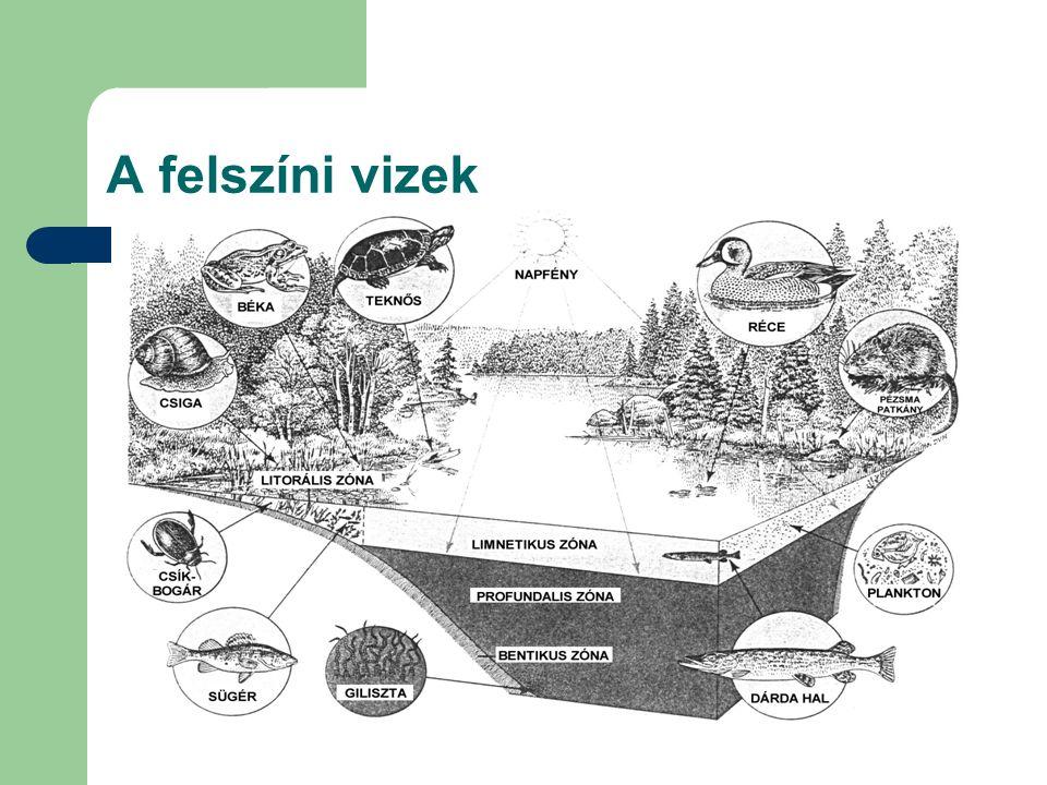 A felszín alatti vizek A felszín alatti vizekre jellemző, hogy ha a felszíni vizek közül csak a szárazföldek felszíni vizeivel hasonlítjuk össze ezeket, akkor nagyobb a víztartó rétegben egyidejűleg tárolt víz mennyisége, kisebb a mozgáskészségük, így kisebb a utánpótlásuk mértéke, élőszervezeteket elsősorban az első vízzáró réteg fölött elhelyezkedő talajvíz tartalmaz és ezek is általában patogén mikroszervezetek.