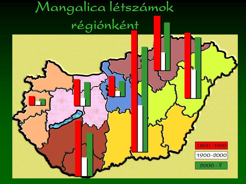 Mangalica létszámok régiónként 1800-1900 1900-2000 2000 -