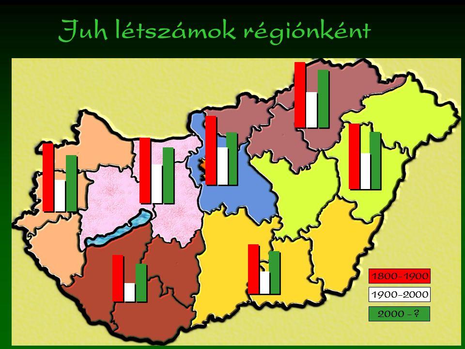 Juh létszámok régiónként 1800-1900 1900-2000 2000 -