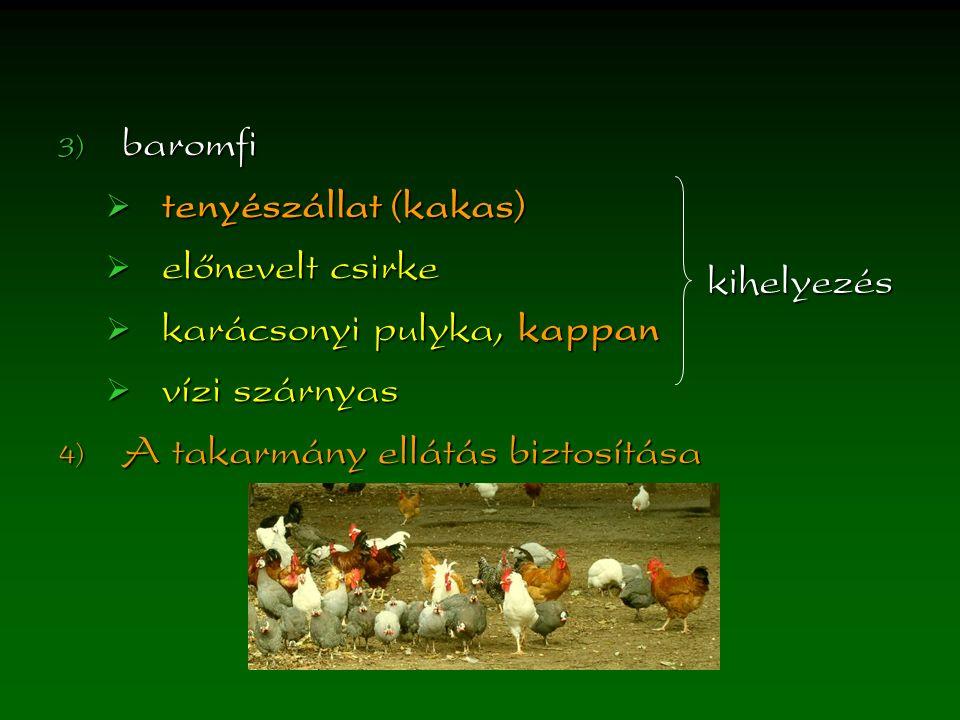 baromfi  tenyészállat (kakas)  előnevelt csirke  karácsonyi pulyka, kappan  vízi szárnyas  A takarmány ellátás biztosítása kihelyezés