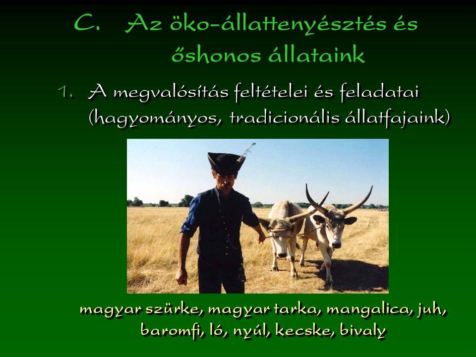 C. Az öko-állattenyésztés és őshonos állataink  A megvalósítás feltételei és feladatai (hagyományos, tradicionális állatfajaink) magyar szürke, magy
