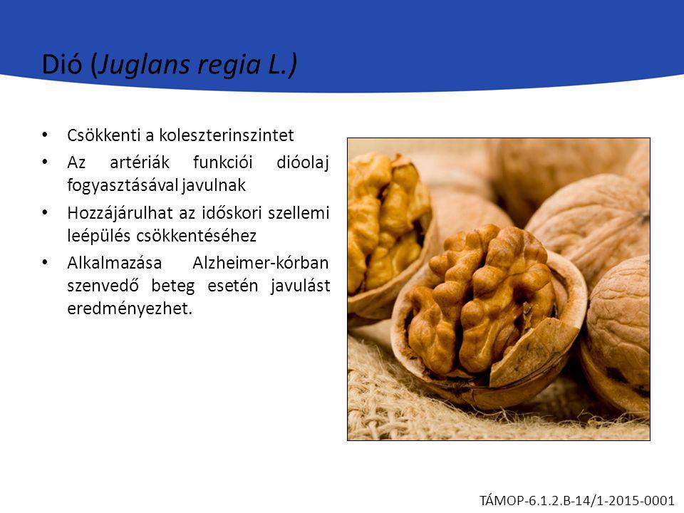 Dió (Juglans regia L.) Csökkenti a koleszterinszintet Az artériák funkciói dióolaj fogyasztásával javulnak Hozzájárulhat az időskori szellemi leépülés csökkentéséhez Alkalmazása Alzheimer-kórban szenvedő beteg esetén javulást eredményezhet.