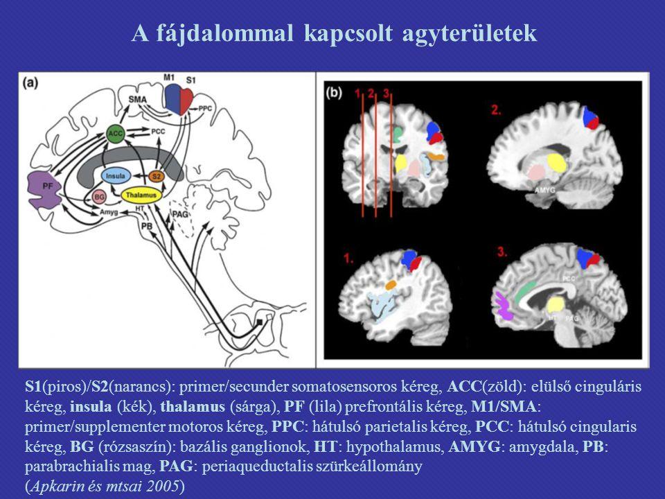 A fájdalommal kapcsolt agyterületek S1(piros)/S2(narancs): primer/secunder somatosensoros kéreg, ACC(zöld): elülső cinguláris kéreg, insula (kék), thalamus (sárga), PF (lila) prefrontális kéreg, M1/SMA: primer/supplementer motoros kéreg, PPC: hátulsó parietalis kéreg, PCC: hátulsó cingularis kéreg, BG (rózsaszín): bazális ganglionok, HT: hypothalamus, AMYG: amygdala, PB: parabrachialis mag, PAG: periaqueductalis szürkeállomány (Apkarin és mtsai 2005 )