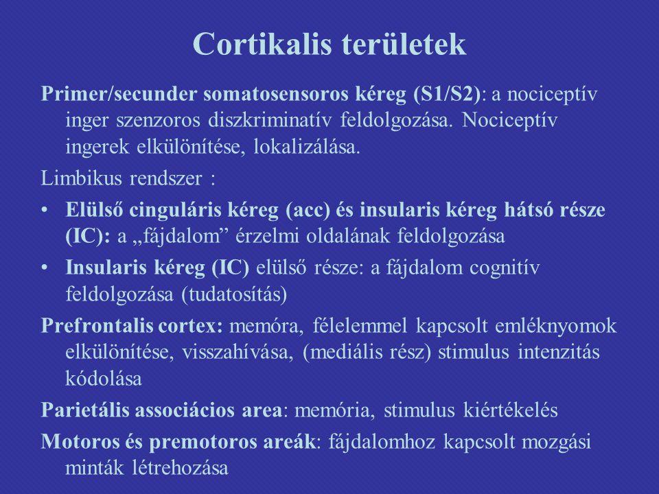 Cortikalis területek Primer/secunder somatosensoros kéreg (S1/S2): a nociceptív inger szenzoros diszkriminatív feldolgozása.