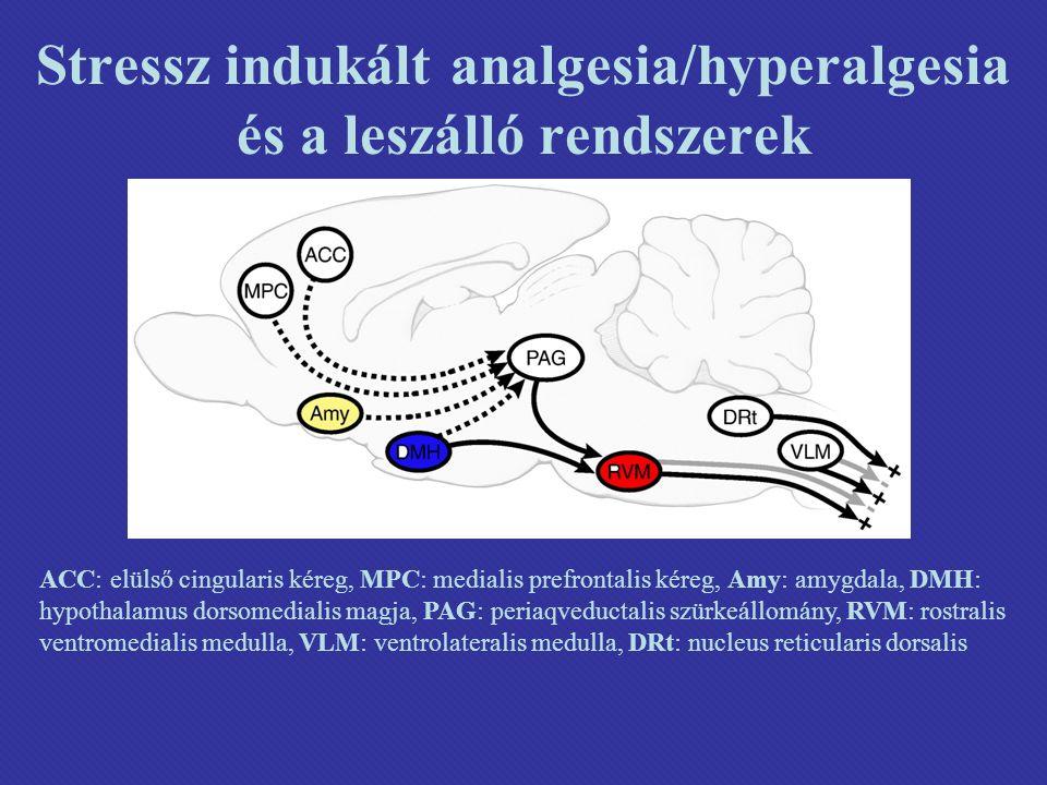 Stressz indukált analgesia/hyperalgesia és a leszálló rendszerek ACC: elülső cingularis kéreg, MPC: medialis prefrontalis kéreg, Amy: amygdala, DMH: hypothalamus dorsomedialis magja, PAG: periaqveductalis szürkeállomány, RVM: rostralis ventromedialis medulla, VLM: ventrolateralis medulla, DRt: nucleus reticularis dorsalis