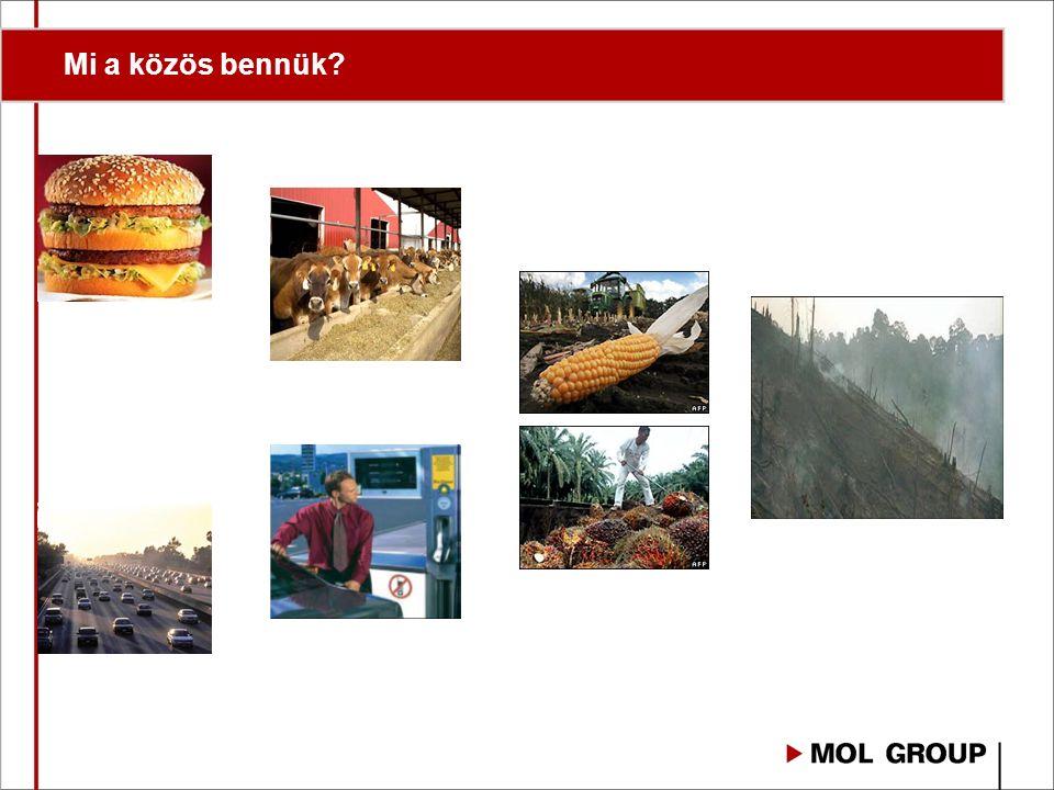 A biomasszában elraktározott Energia hasznosításának hatásfoka a mi felelősségünk!
