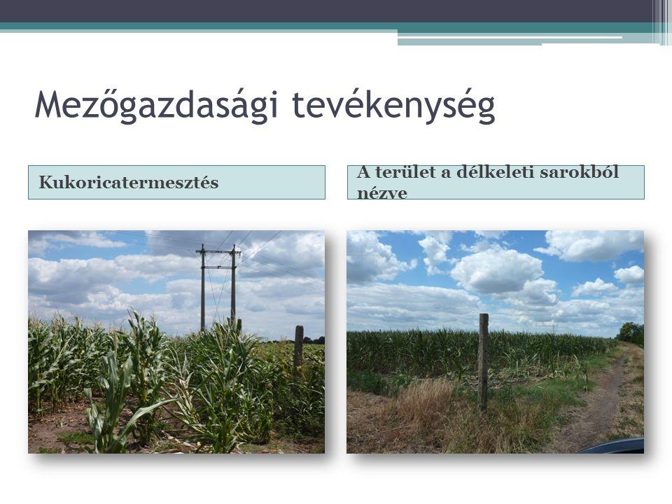 Mezőgazdasági tevékenység Kukoricatermesztés A terület a délkeleti sarokból nézve