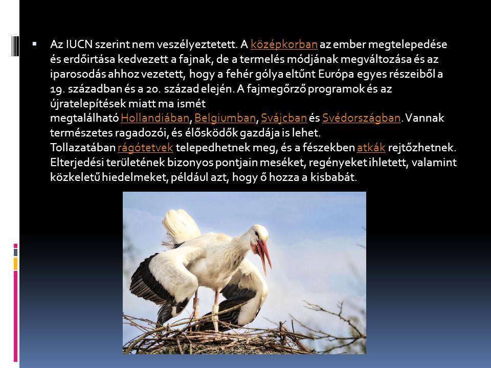  Élőhelye:  A fehér gólya táplálkozáshoz leginkább nyílt füves területeket, mezőket, sekély vizeket keres fel.