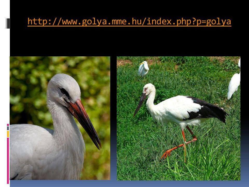  A fehér gólya palearktiszti vándormadár, télire délre vándorol.