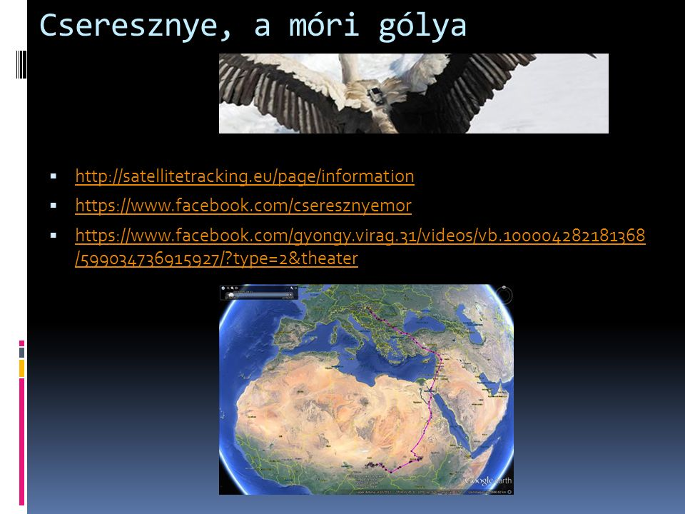 Cseresznye, a móri gólya  http://satellitetracking.eu/page/information http://satellitetracking.eu/page/information  https://www.facebook.com/cseresznyemor https://www.facebook.com/cseresznyemor  https://www.facebook.com/gyongy.virag.31/videos/vb.100004282181368 /599034736915927/?type=2&theater https://www.facebook.com/gyongy.virag.31/videos/vb.100004282181368 /599034736915927/?type=2&theater