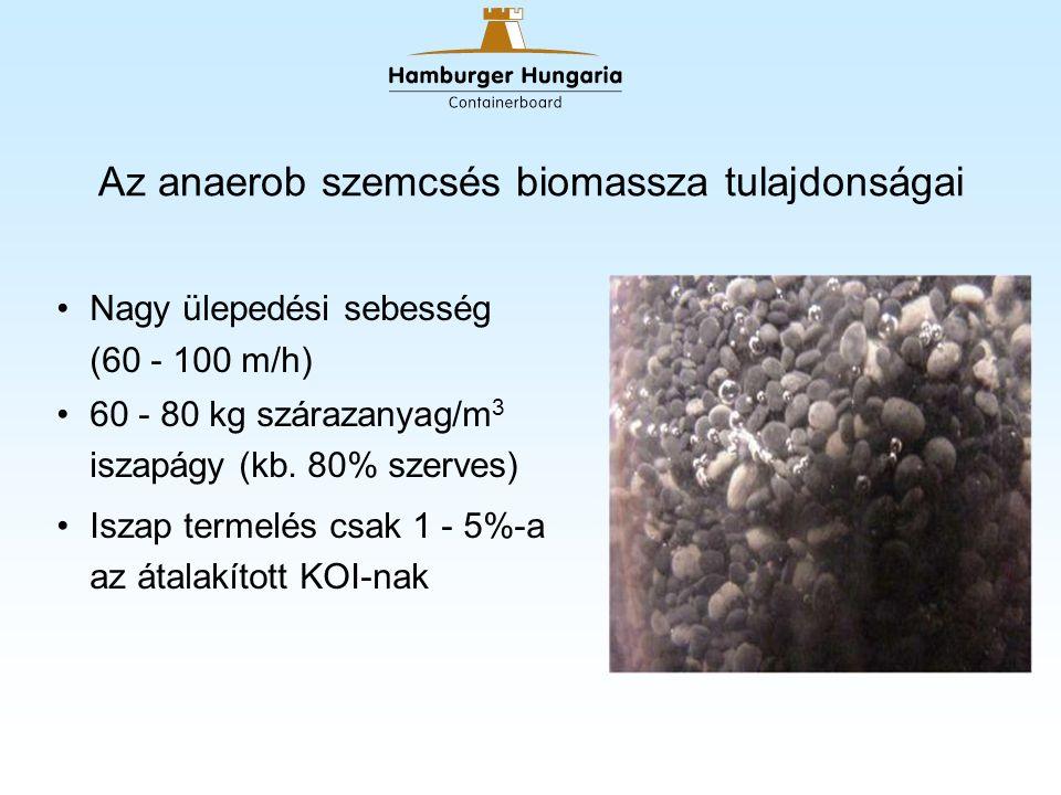 Az anaerob szemcsés biomassza tulajdonságai Nagy ülepedési sebesség (60 - 100 m/h) 60 - 80 kg szárazanyag/m 3 iszapágy (kb.
