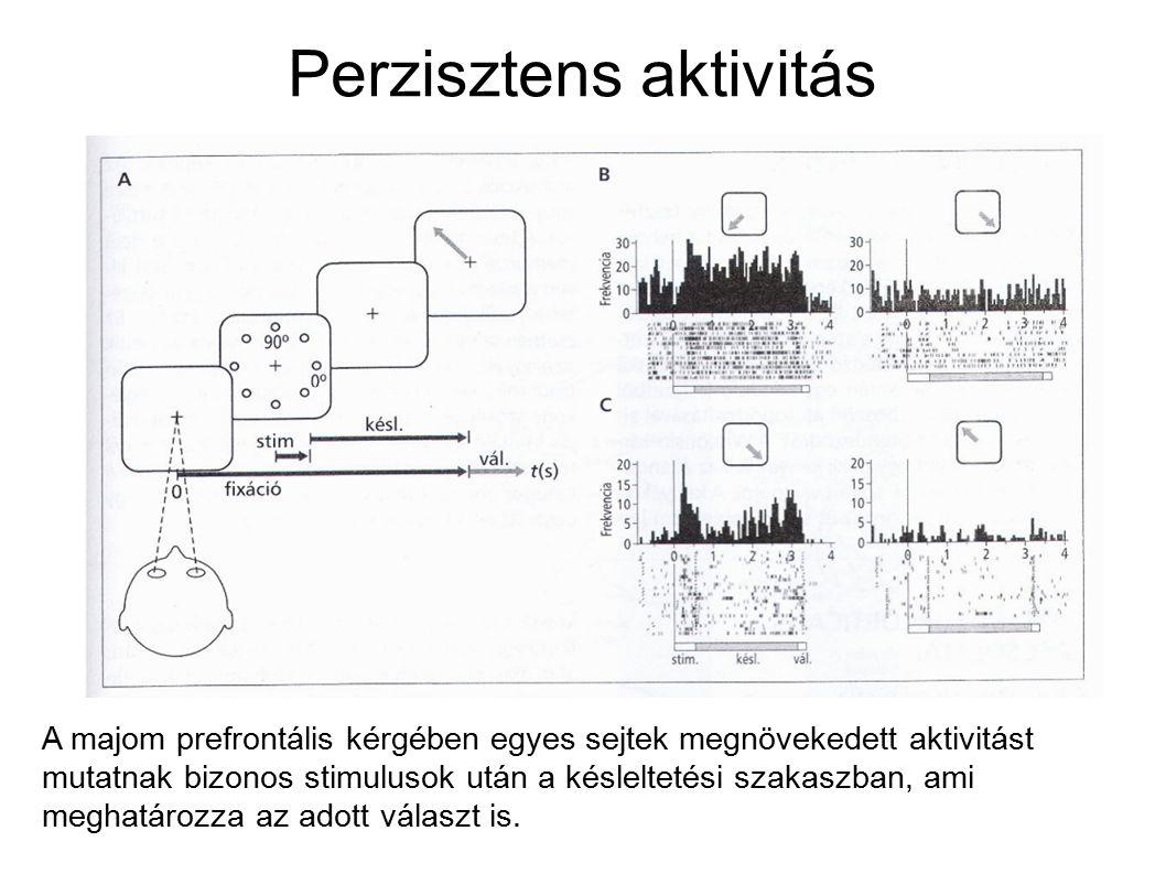 Szinaptikus modell ● Szinaptikus facilitáció és depresszió dinamikája integrate and fire neuronokban ● Fixpont vagy oszcillációs dinamika ● Több elem tárolása