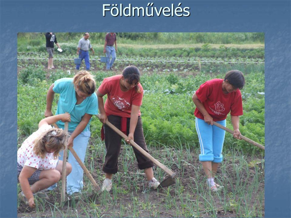 Földművelés