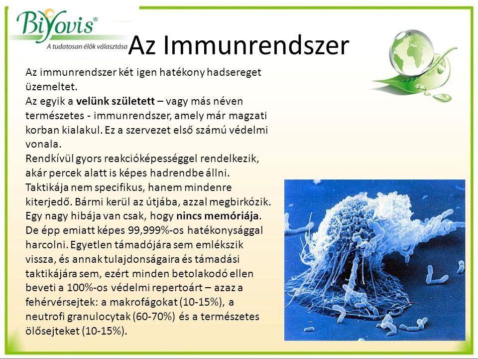 Az Immunrendszer Az immunrendszer két igen hatékony hadsereget üzemeltet.