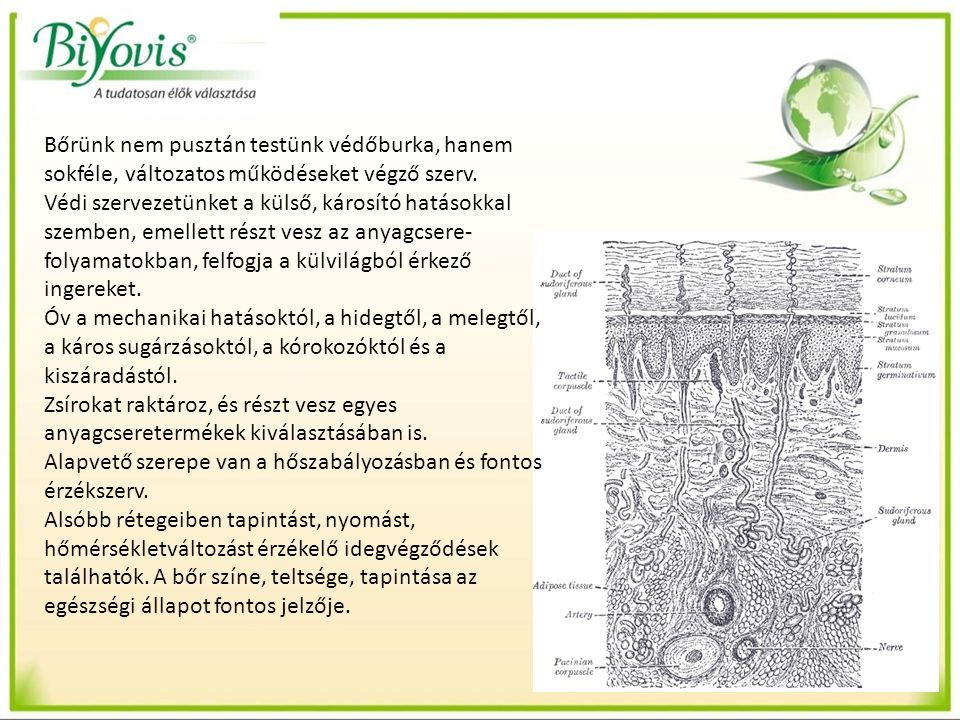 Bőrünk nem pusztán testünk védőburka, hanem sokféle, változatos működéseket végző szerv.