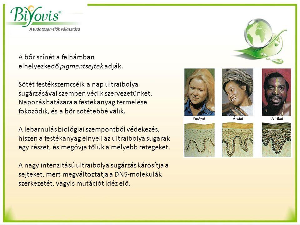 IV.Bőrrák A bőrrák az egyik leggyakrabban előforduló ráktípus a fehérbőrű embereknél.