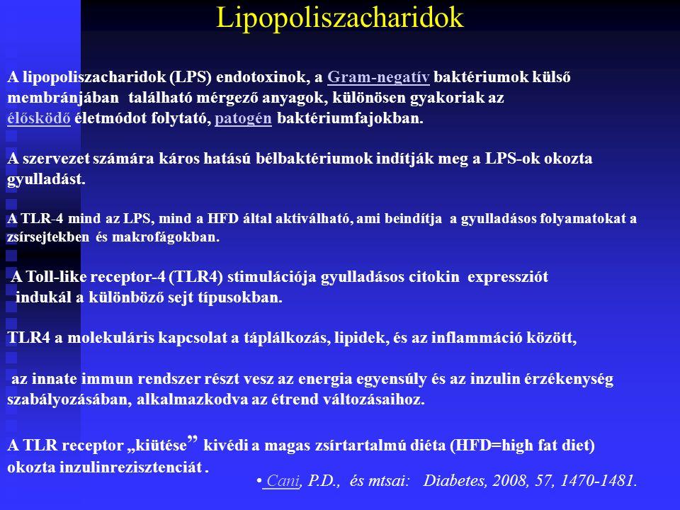 Lipopoliszacharidok A lipopoliszacharidok (LPS) endotoxinok, a Gram-negatív baktériumok külső membránjában található mérgező anyagok, különösen gyakoriak azGram-negatív élősködőélősködő életmódot folytató, patogén baktériumfajokban.patogén A szervezet számára káros hatású bélbaktériumok indítják meg a LPS-ok okozta gyulladást.