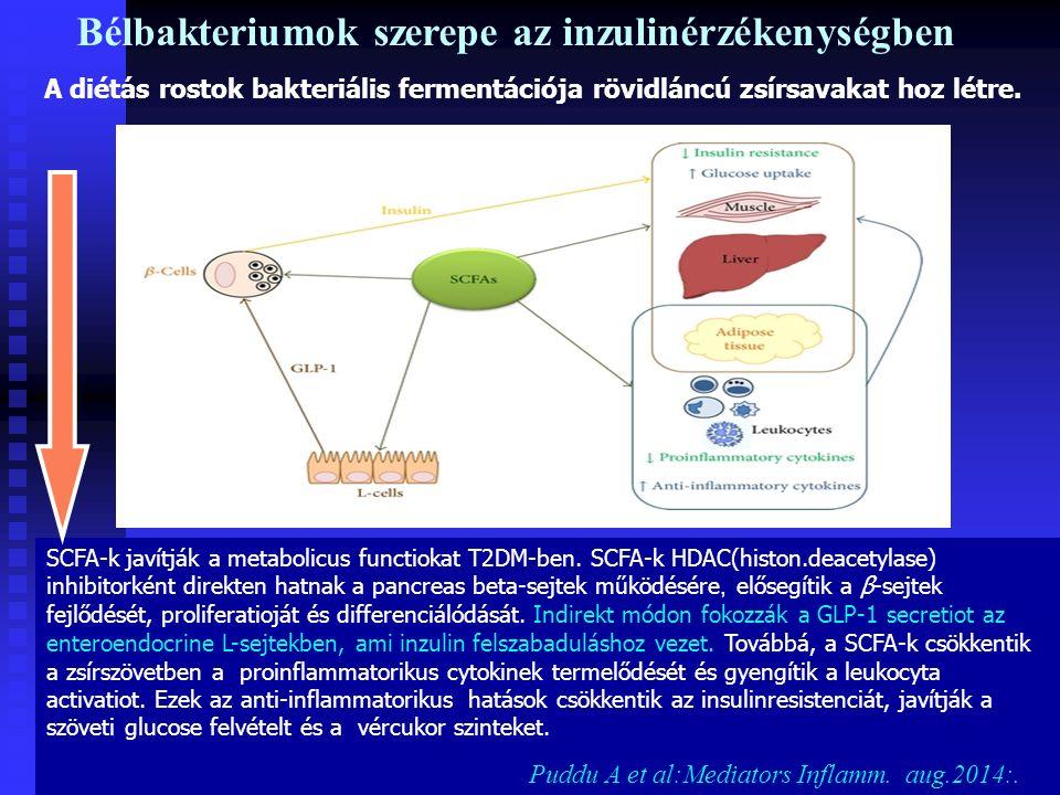 SCFA-k javítják a metabolicus functiokat T2DM-ben.