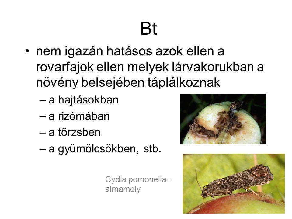 Bt nem igazán hatásos azok ellen a rovarfajok ellen melyek lárvakorukban a növény belsejében táplálkoznak –a hajtásokban –a rizómában –a törzsben –a gyümölcsökben, stb.