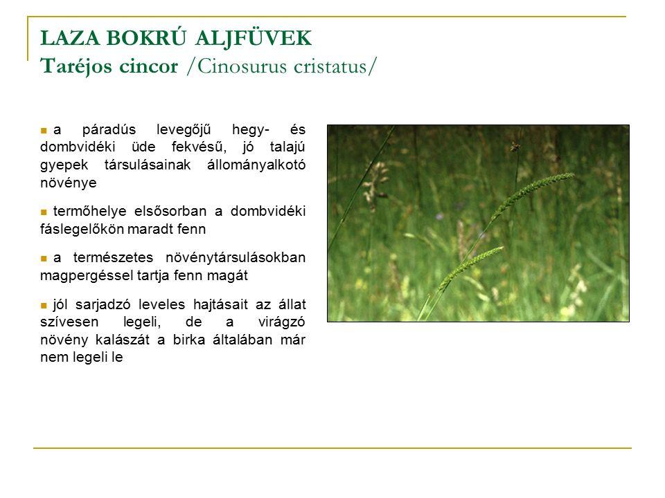 LAZA BOKRÚ ALJFÜVEK Taréjos cincor /Cinosurus cristatus/ a páradús levegőjű hegy- és dombvidéki üde fekvésű, jó talajú gyepek társulásainak állományalkotó növénye termőhelye elsősorban a dombvidéki fáslegelőkön maradt fenn a természetes növénytársulásokban magpergéssel tartja fenn magát jól sarjadzó leveles hajtásait az állat szívesen legeli, de a virágzó növény kalászát a birka általában már nem legeli le