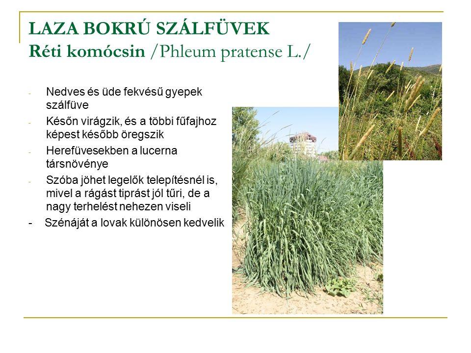 LAZA BOKRÚ SZÁLFÜVEK Réti komócsin /Phleum pratense L./ - Nedves és üde fekvésű gyepek szálfüve - Későn virágzik, és a többi fűfajhoz képest később öregszik - Herefüvesekben a lucerna társnövénye - Szóba jöhet legelők telepítésnél is, mivel a rágást tiprást jól tűri, de a nagy terhelést nehezen viseli - Szénáját a lovak különösen kedvelik